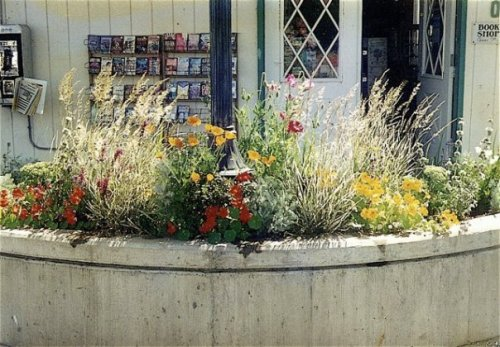 planter by Whale's Tale bookshop in summer