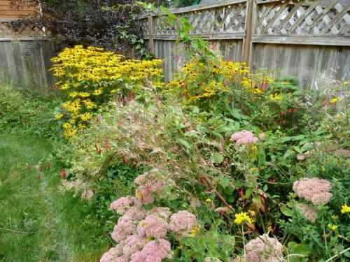 more good plants, with dwarf fireweed