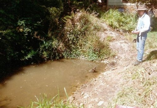 pond in August '94