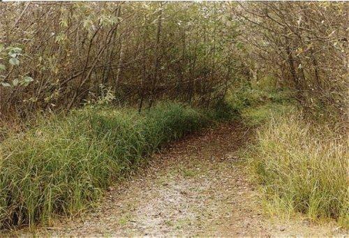 Beard's Hollow Road