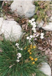 tiny flowers of winter