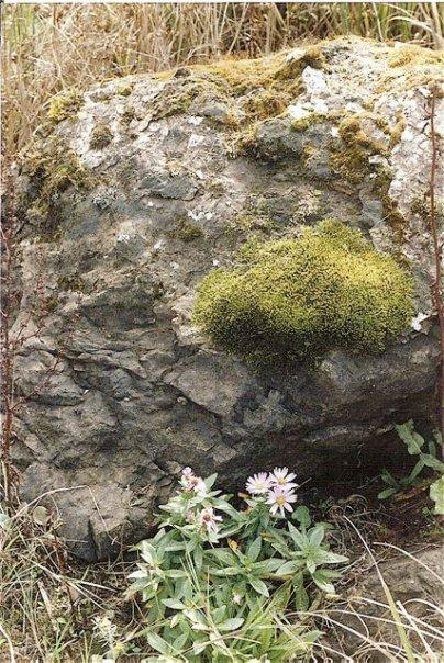 rocks at Beard's Hollow
