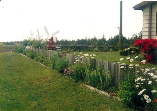 reviving Janine's former garden
