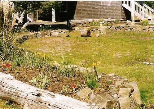 Cynthia's new garden