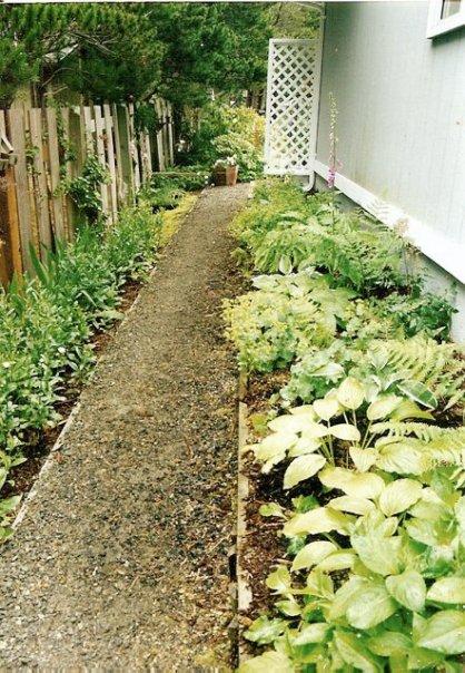 Maxine's shade garden