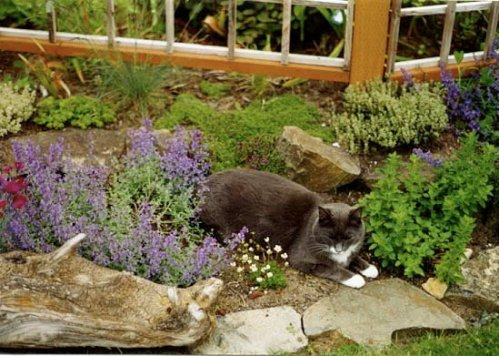 Spencer and catmint