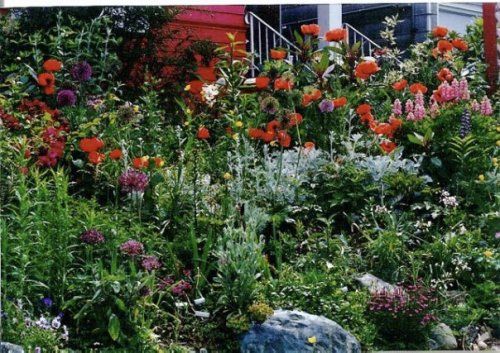 summer, front garden