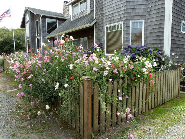 Cannon Beach Cottage Amp Garden Tour High Jinks Tangly