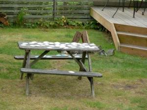 picnic table with sand dollars in red cottage yard