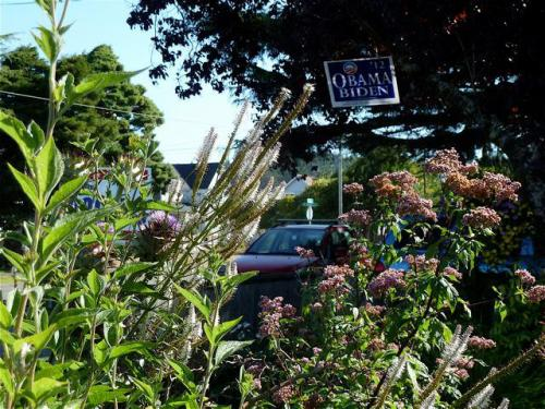 front garden with Veronica and Eupatorium, 5 September
