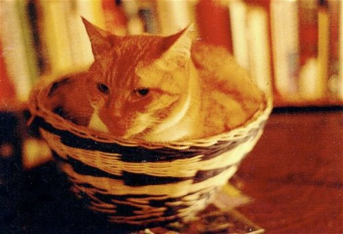 Valene staying cozy in a basket I had made back in happier days in Seattle.
