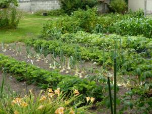 vegetable rows