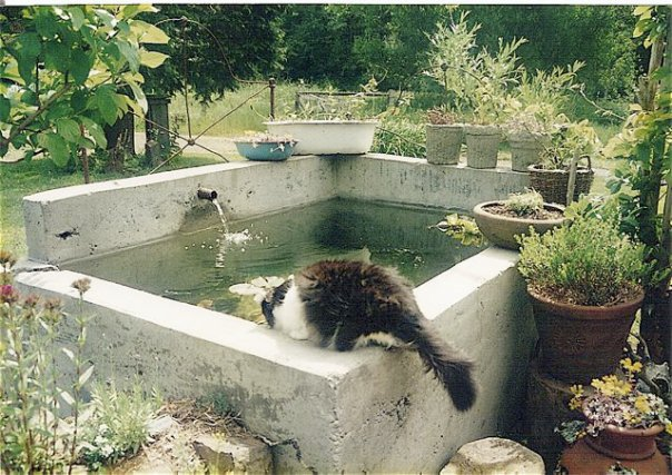 Water Feature On Patio