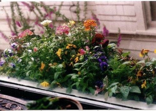 livingrom windowbox in summer