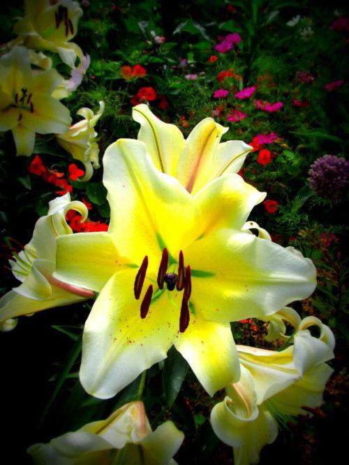 yellow lily with green throat