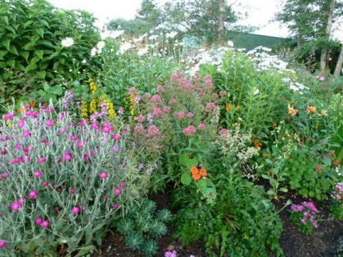 our garden, July 2012