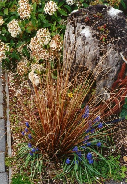 Anchorage cottages, Carex (New Zealand copper sedge) and Muscari