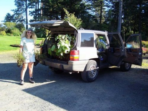 Sheila's vehicle stuffed with plants