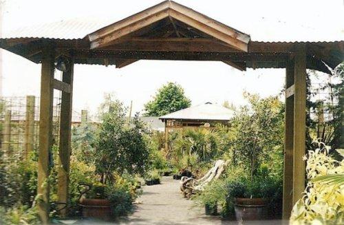 Cistus Nursery