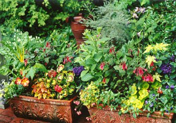 containers in Lucy's garden