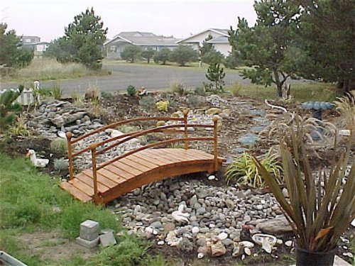 Coral's new creekbed