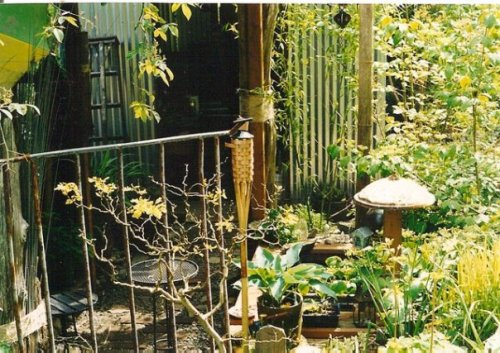 silver shed garden