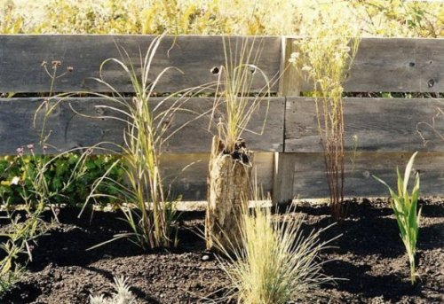 newly planted west side garden, with grass planted in driftwood