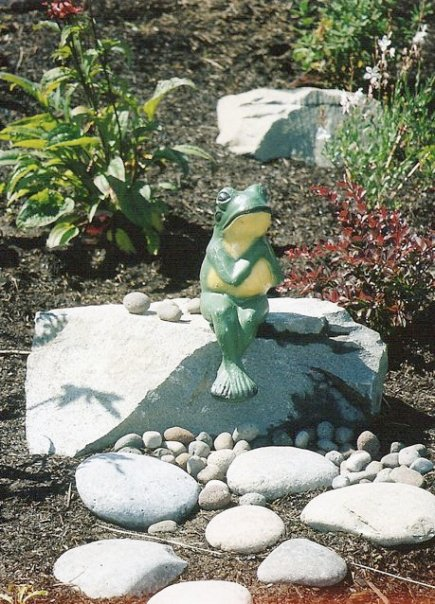 frog and the little rocks