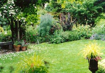 Lucy's back garden