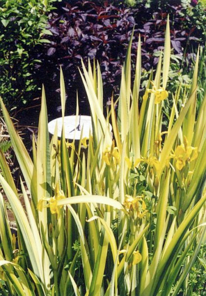 by the lower pond, 2000