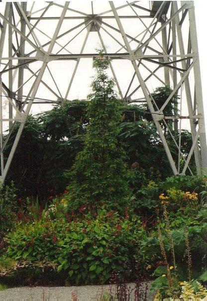 Jurassic garden