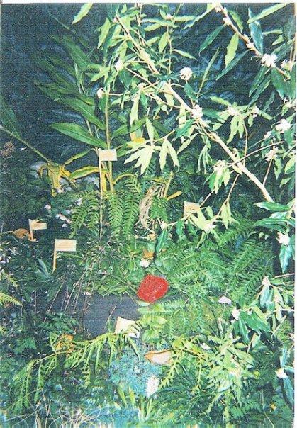 Heronswood display garden