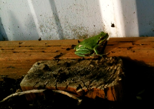 and a Payson Hall frog!