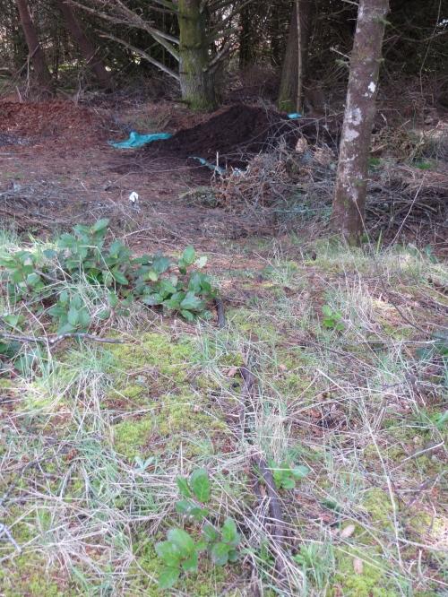far distant mulch pile