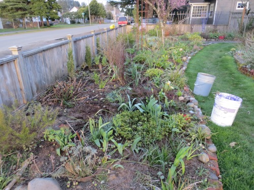 front bed, mostly weeded