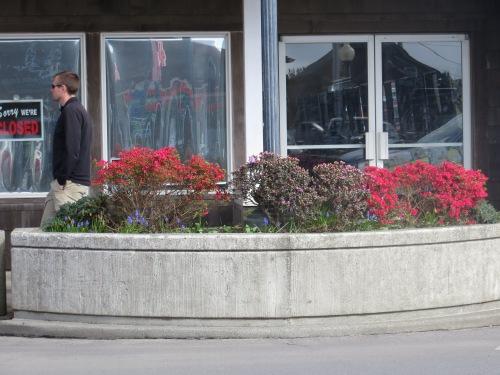 spring azalea planter