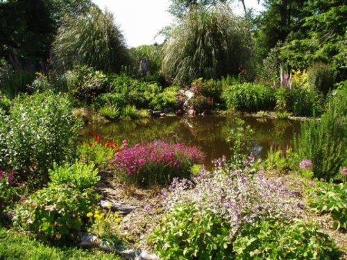 Joanne's garden