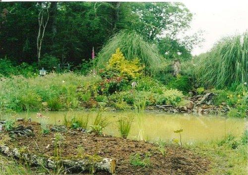 Joanne's new garden