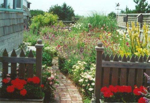 Jo's garden, looking west
