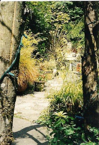 Peeking into the Molly Ward courtyard
