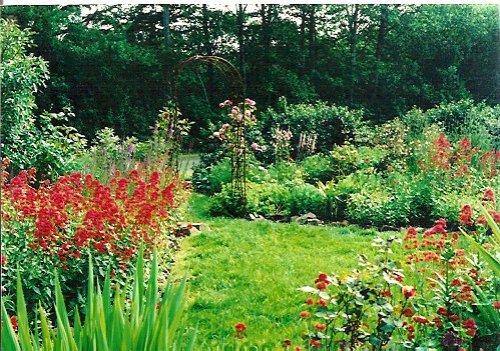 Mom's south garden