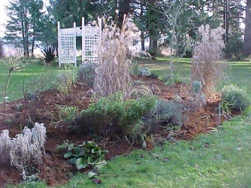 mulch on Laurie's winter garden