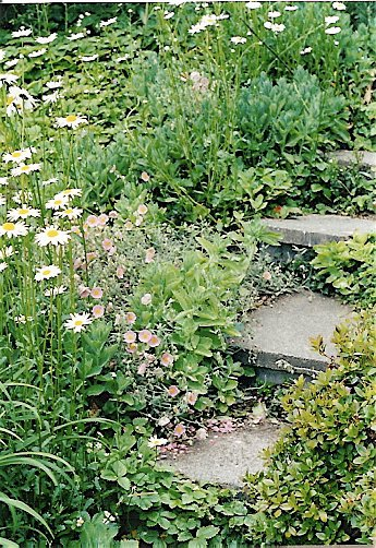 little steps in the older part of the garden