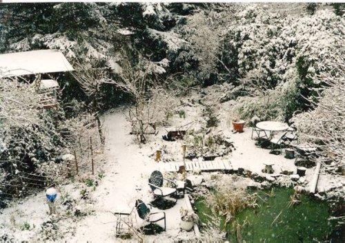 Our garden in snow