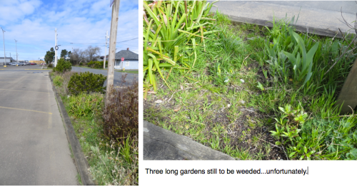 more weeding