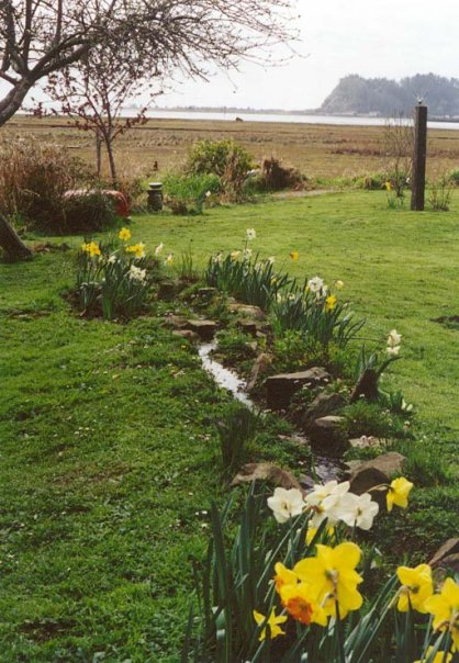 narcissi planted along a stream