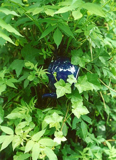 the hanging of teapots in shrubs