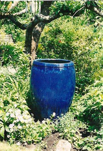 in the Molly Ward garden