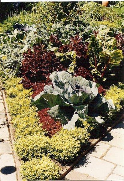 in the Heronswood vegetable garden