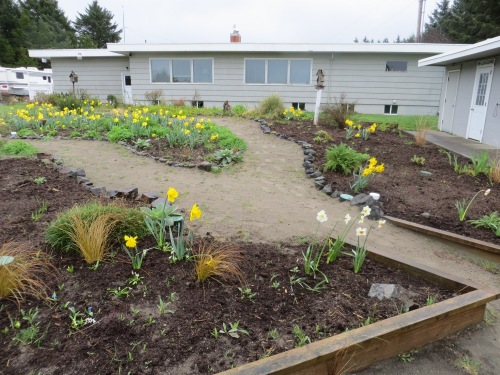 mulched with dairy manure